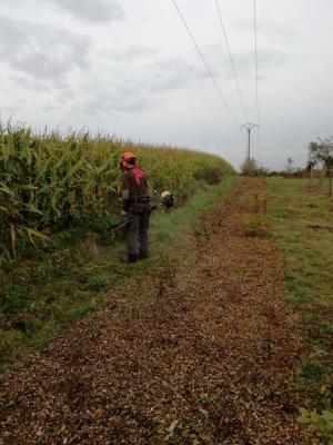Agro entretien du verger 2
