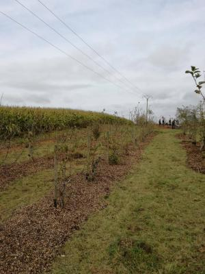 Agro entretien du verger 5